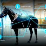 Orscana – derkowanie na miarę końskich potrzeb?